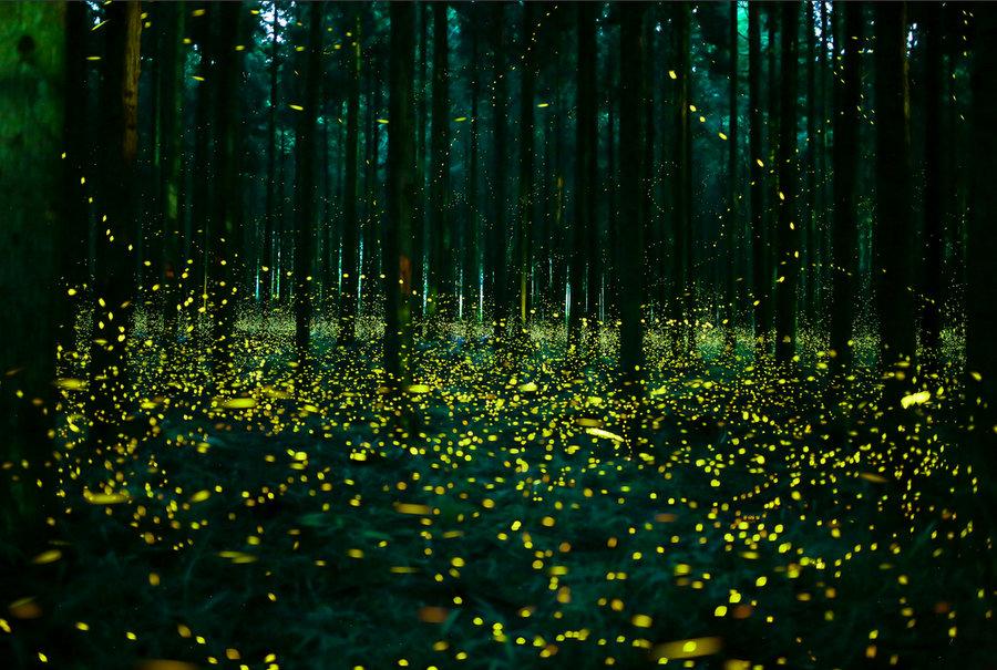 fireflies-6